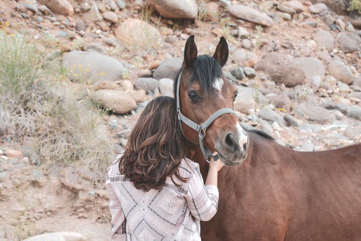 Horse First Aid Kit.jpg