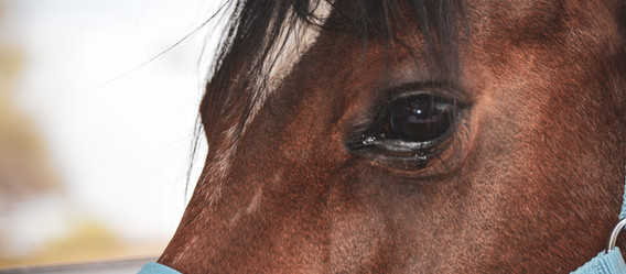 """An """"Eye Opener"""" Article on Why Your Horse Should Not Be Blanketed"""