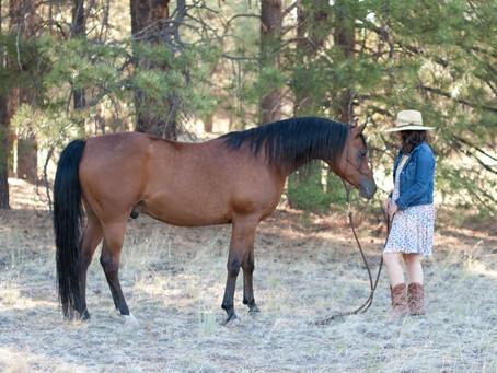 Why Saddle & Sage