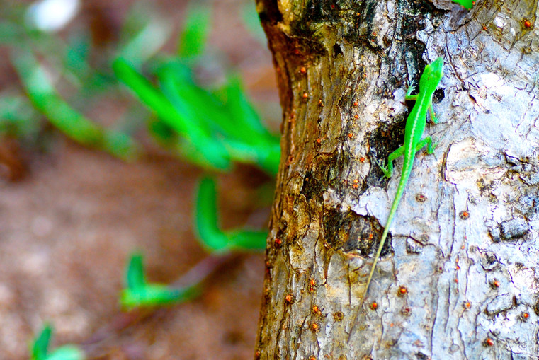 Bright Green Gecko