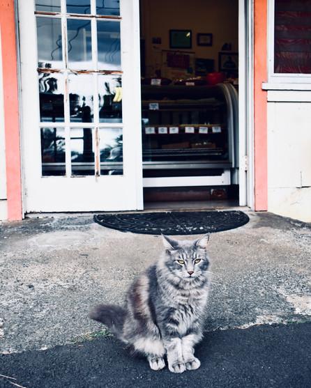 Ishigo's Cat