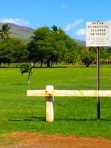 One Alii Park ©︎2014
