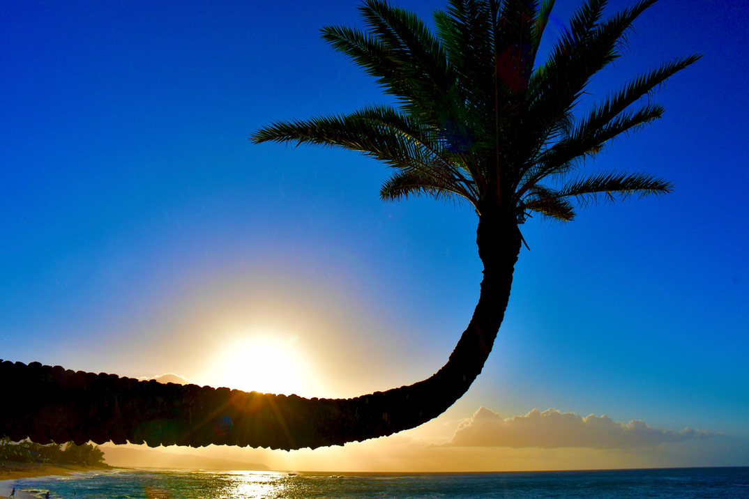 Crooked Palm Tree in Sunset