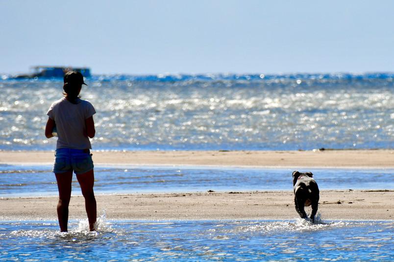 Take a stroll with a dog