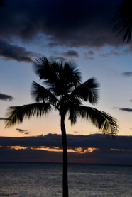 Palm Tree in Golden Hour