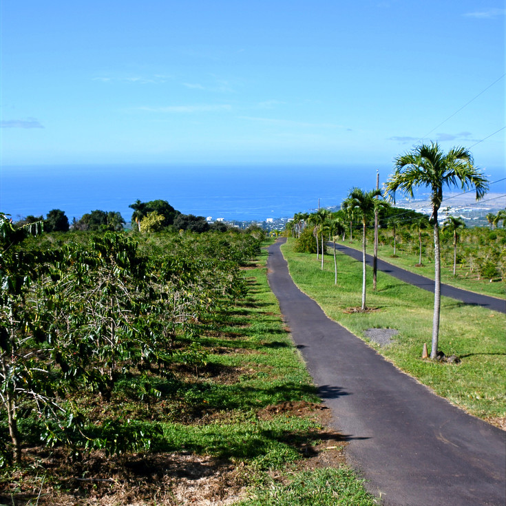 UCC Hawaii Coffee Farm