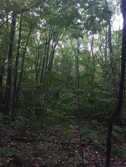 Rousseau Forest (Pincourt, Montreal) com