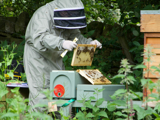 How do I start beekeeping?