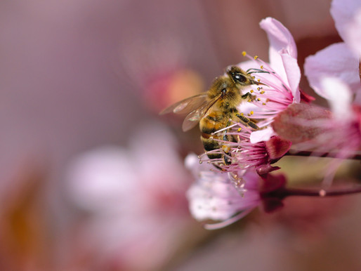 The Honeybee Worker - simply the best!