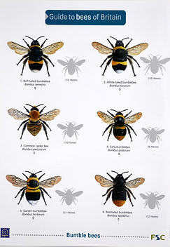 A book - Guide to the bees of Britain.jpeg