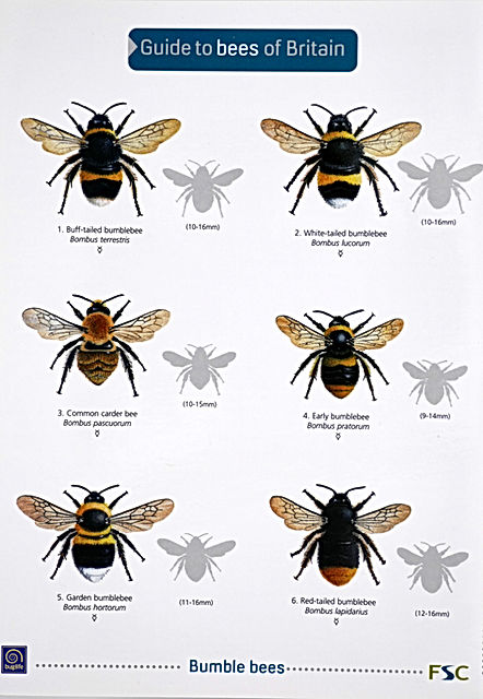 Book - Guide to the bees of Britain.jpeg