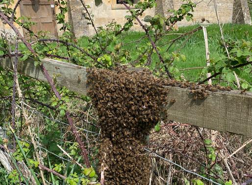 What's in a honeybee swarm?