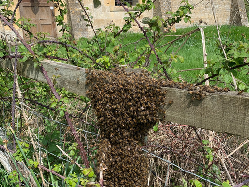 What's in a honeybee swarm?