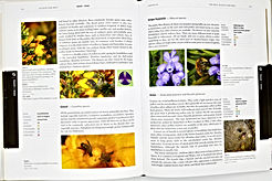 Sample pages - Plants for Bees.jpeg