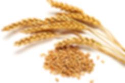 WheatEars_Embedded.jpg