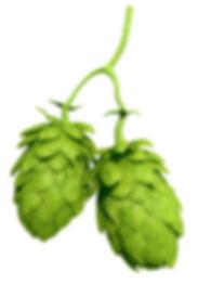 hops-3d-model-max-obj.jpg