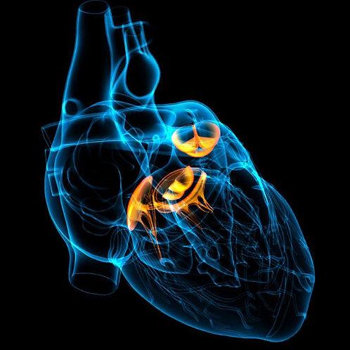 Cardiologia para Clínicos