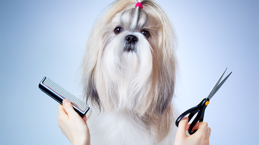 Why Grooming is important for your Pet? | Pupkitt Pet Care