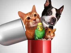 Vet Pharmacy: Best place to buy Pet Medicine Online in India