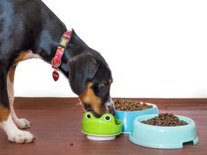 5 Best Dog Food In India | Pupkitt Pet Care