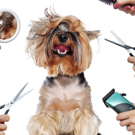 Why Grooming is important for your Pet?