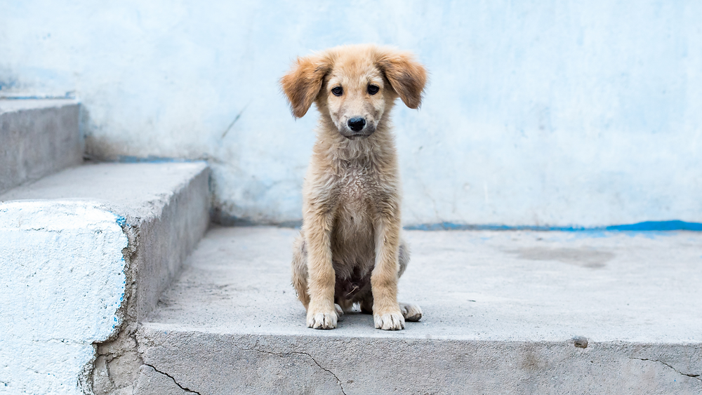 Street dog care sitting on stairs