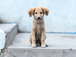 How to take care of Street Dogs and Puppies?