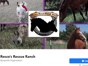 Rosco's Rescue Ranch: Apr 1