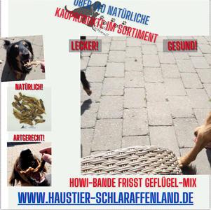 Howi-Bande frisst Geflügel-Mix.mp4