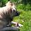 Thumbnail: Hirsch-Ohren mit Fell