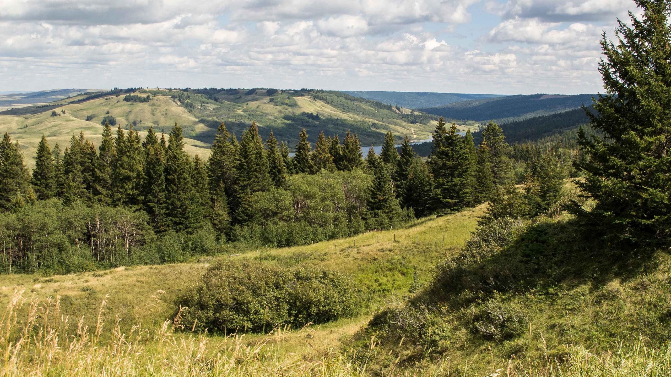Cypress Hills/Reesor Lake