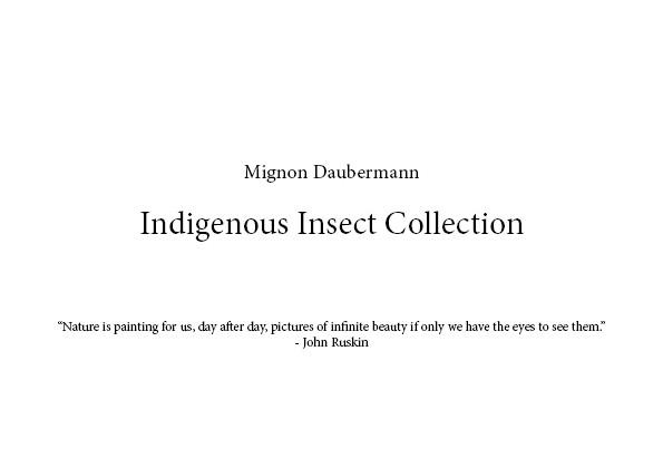"Mignon Daubermann   Indigenous Insect Collection  ""Nature is painting for us, day after day, pictures of infinite beauty if only we have the eyes to see them."" - John Ruskin"