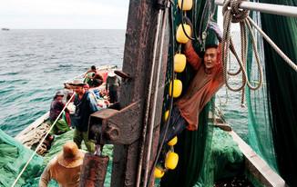 12-021-182 Ikan bilis fishing-edt2 (web res).jpg