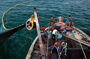 12-021-113 Ikan bilis fishing-edt1 (web res).jpg
