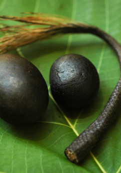This is a bezoar stone found in a porcupine stomach. It is used as a traditional medicine among the Orang Asal as well the the Chinese for overall health. Some say it can cure cancer. Not all porcupines have this stone in their stomach because it is a deformity, so it is very rare. The Murut man who found this porcupine with the stone had actually dreamt about getting it the night before. Sure enough, when he went hunting the next day, he found it!