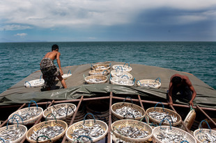 12-032-360 Ikan bilis boat-edt1 (web res).jpg