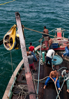 Anchovy fishing off the coast of Kedah.