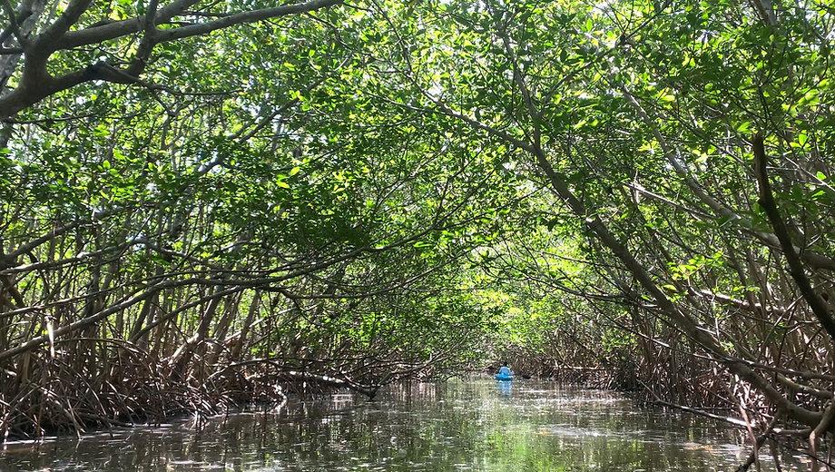Mangrove Canal