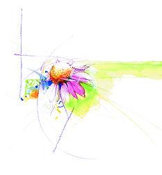 2_Einzelne Blüte.jpg