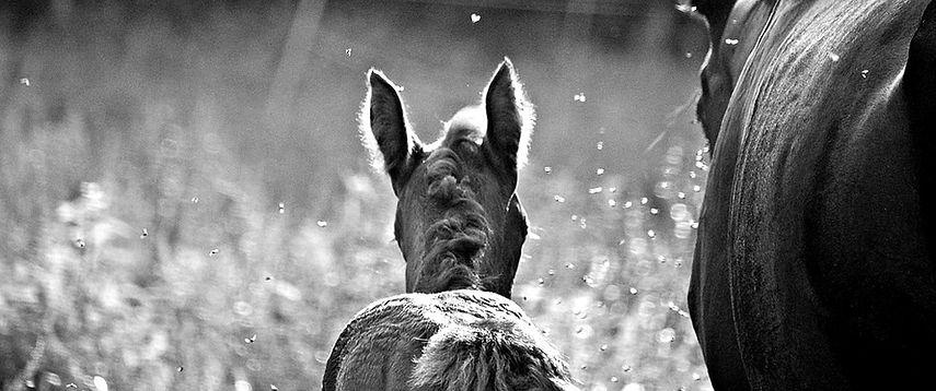 horse-3643337_960_720_bearbeitet.jpg