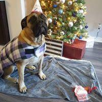 Dog Winter Fleece Jacket Purple Plaid