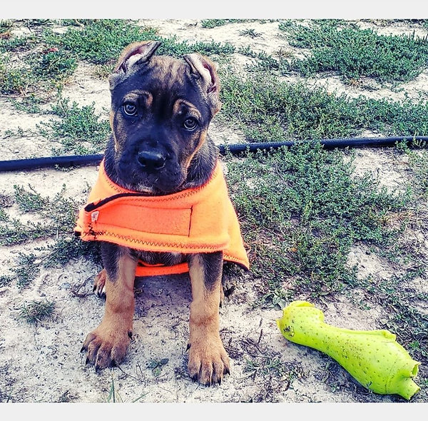 Dog Winter Fleece Jacket Orange