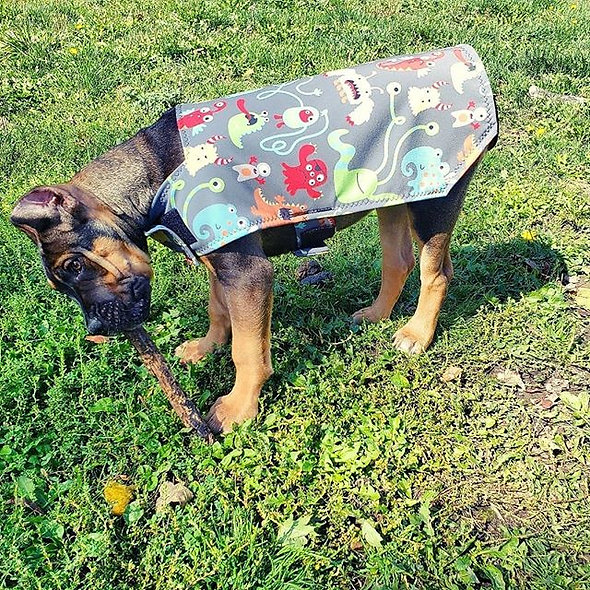 Dog Winter Waterproof Jacket
