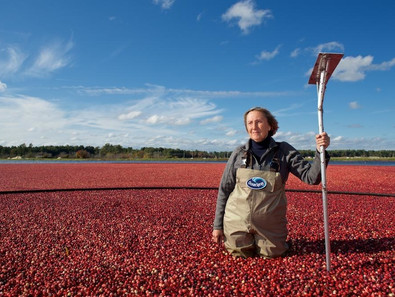 Ocean Spray Taps KWG as Media Agency of Record for Cranberry Business