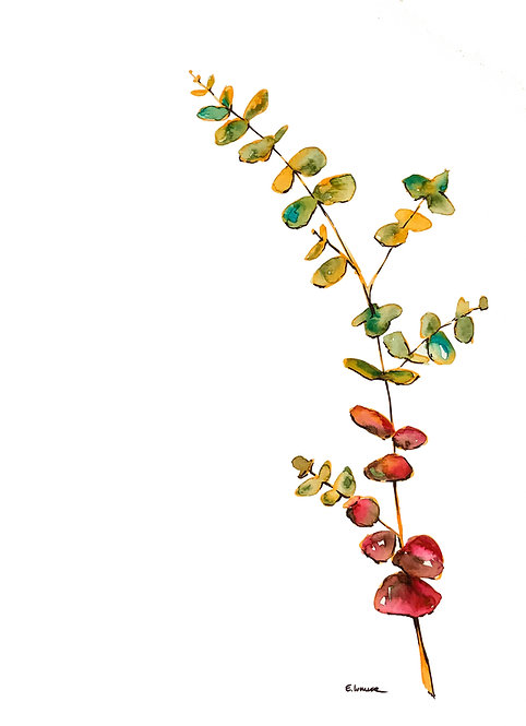 Ramita de eucaliptus cinerea I (40 x 30 cms)