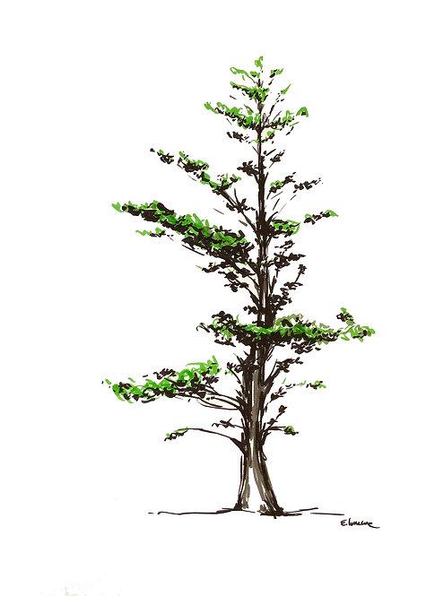 Estudio de un árbol I (40 x 30 cms)