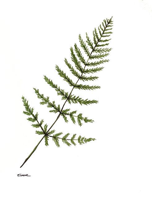 Helecho I (40 x 30 cms)