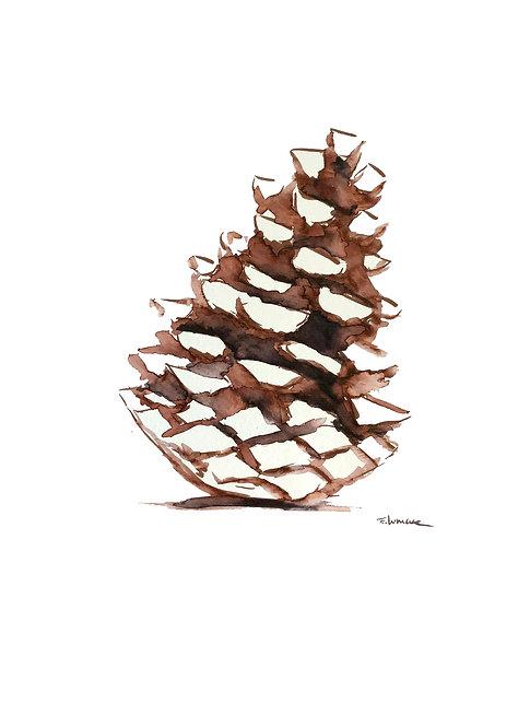 Piña de pino I (40 x 30 cms)