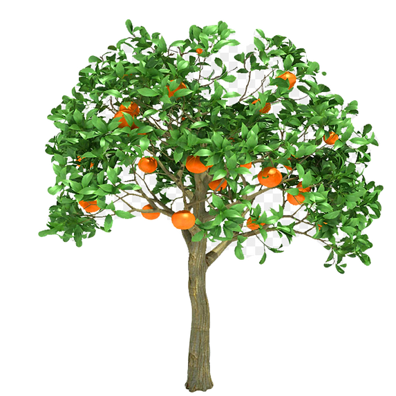 orange%20tree_edited.png