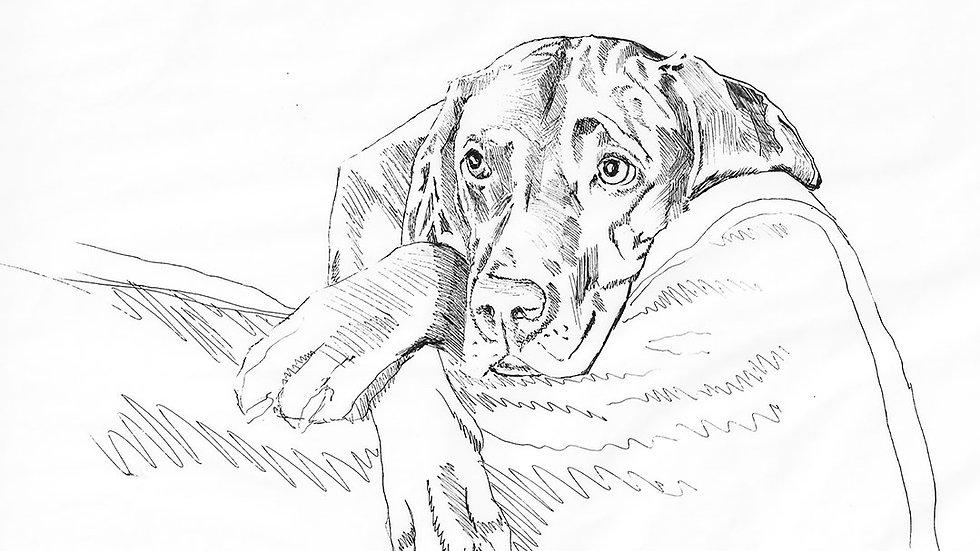 Mini-Dog Portrait